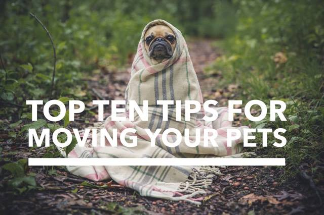 Top Ten Tips For Moving Your Pets